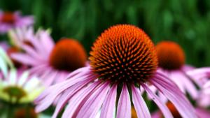 Plantas que ayudan al sistema inmunológico