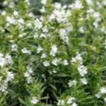 Plantas que suben el estado de ánimo