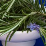Plantas que cuidan el cabello