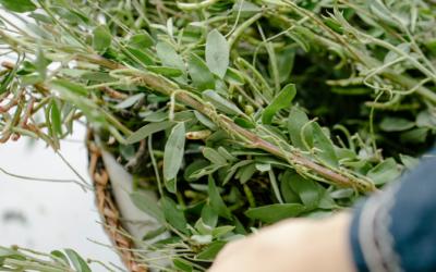 Las  mejores plantas digestivas para combatir el estreñimiento